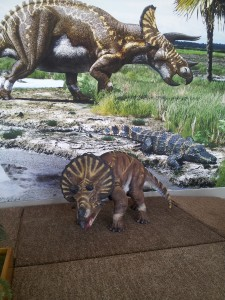 Baby Triceratops
