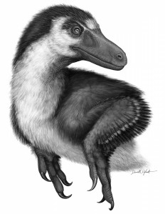 Acheroraptor temertyorum from the Hell Creek Formation of Montana, possible close relative of Boreonykus.