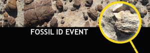 fossil-id-event-image