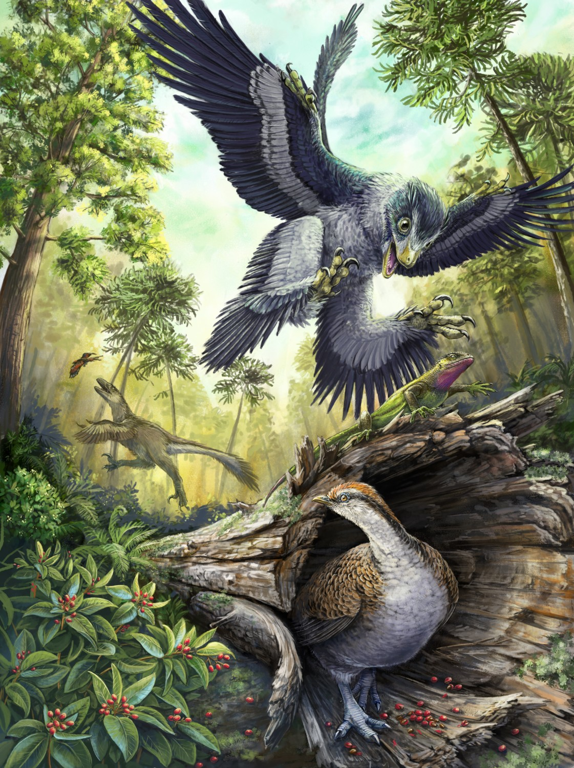 evidence suggest birds ancestors were the dinosaurs - suggests birds appeared much later, in the triassic, after dinosaurs had radiated into many different lineages (including the theropods) - many think dromaeosaurs (carnivorous, bipedal dinosaurs), were the specific theropods from which birds evolved.
